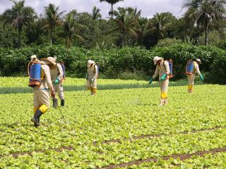 Agrotóxicos na mira da sociedade